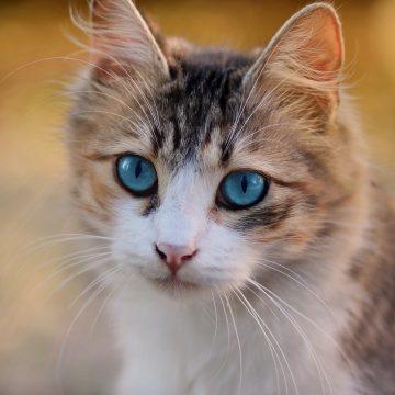 cat-3336579_1280